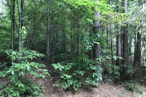 Managed Pine Timber Investment - Monroe County MS