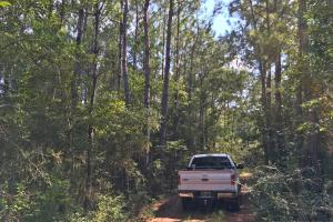 Spring Branch Lake Hunting and Timber Investment in Washington, AL (19 of 21)