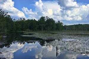 Spring Branch Lake Hunting and Timber Investment - Washington County AL