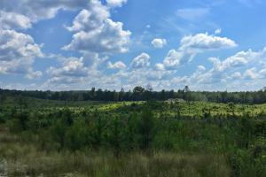 Spring Branch Lake Hunting and Timber Investment in Washington, AL (14 of 21)