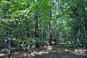 Spring Branch Lake Hunting and Timber Investment in Washington, AL (10 of 21)