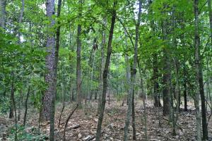 Spring Branch Lake Hunting and Timber Investment in Washington, AL (13 of 21)