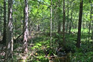 Spring Branch Lake Hunting and Timber Investment in Washington, AL (6 of 21)