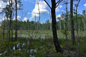 Spring Branch Lake Hunting and Timber Investment in Washington, AL (20 of 21)