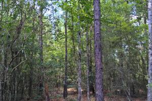 Spring Branch Lake Hunting and Timber Investment in Washington, AL (17 of 21)