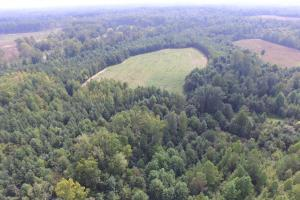 65 Acre Yesteryear Farmstead  - Person County NC