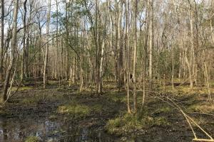 Salkehatchie River Home Site in Barnwell, SC (8 of 49)