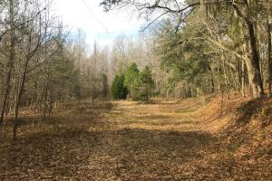 Salkehatchie River Home Site in Barnwell, SC (6 of 49)