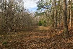 Salkehatchie River Home Site in Barnwell, SC (2 of 49)