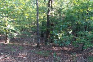 5 Acre Residential Lot  in Faulkner, AR (11 of 19)