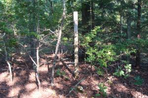 5 Acre Residential Lot  in Faulkner, AR (13 of 19)