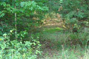 5 Acre Residential Lot  in Faulkner, AR (16 of 19)