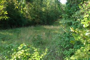 5 Acre Residential Lot  in Faulkner, AR (7 of 19)
