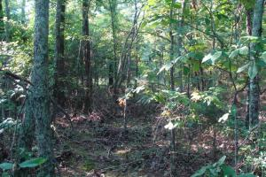 5 Acre Residential Lot  in Faulkner, AR (6 of 19)