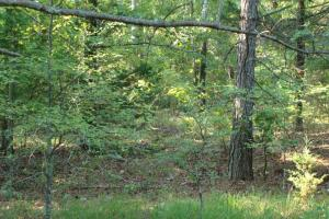 5 Acre Residential Lot  in Faulkner, AR (5 of 19)