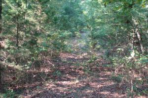 5 Acre Residential Lot  in Faulkner, AR (9 of 19)