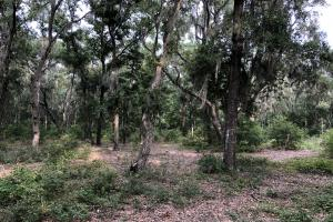 St. Helena Private Wooded Future Estate in Beaufort, SC (7 of 27)