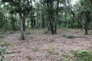St. Helena Private Wooded Future Estate in Beaufort, SC (17 of 27)