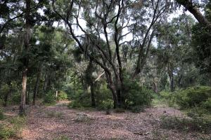 St. Helena Private Wooded Future Estate - Beaufort County SC