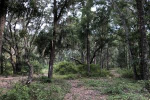 St. Helena Private Wooded Future Estate in Beaufort, SC (6 of 27)