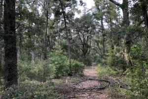 St. Helena Private Wooded Future Estate in Beaufort, SC (8 of 27)