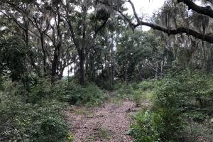 St. Helena Private Wooded Future Estate in Beaufort, SC (3 of 27)
