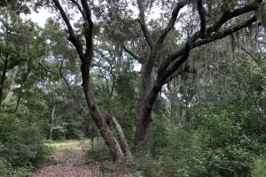 St. Helena Private Wooded Future Estate in Beaufort, SC (18 of 27)