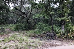 St. Helena Private Wooded Future Estate in Beaufort, SC (19 of 27)