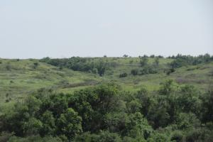 Osborne Hunting and Cattle Ranch - Osborne County KS