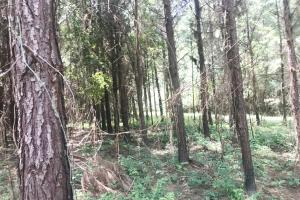Sipsey River Hunting Tract - Fayette County AL
