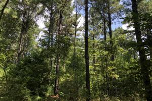 Hinds County Recreational Paradise in Hinds, MS (48 of 50)