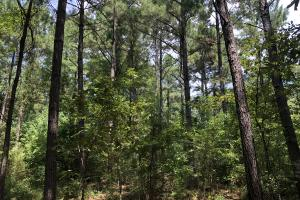 Hinds County Recreational Paradise in Hinds, MS (46 of 50)