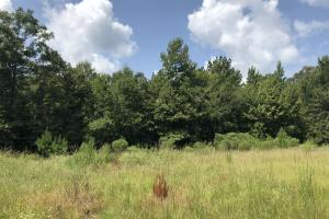 Hinds County Recreational Paradise in Hinds, MS (31 of 50)