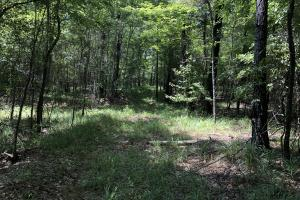 Hinds County Recreational Paradise in Hinds, MS (33 of 50)