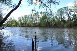 Cape Fear River Duck Impoundment in Bladen, NC (10 of 19)