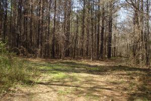 Black Warrior Hunting Tract - Hale County AL