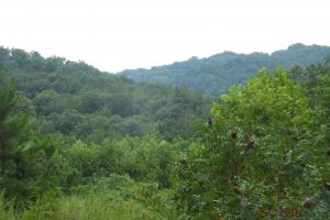 Ideal hunt, recreational land, Little Sturgeon Creek - Owsley County KY