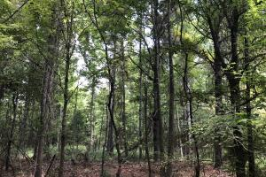 Midway Road Timber Investment in Hinds, MS (16 of 16)