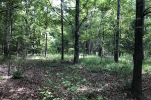 Midway Road Timber Investment in Hinds, MS (7 of 16)