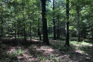 Midway Road Timber Investment in Hinds, MS (10 of 16)