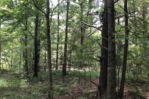 Midway Road Timber Investment in Hinds, MS (14 of 16)