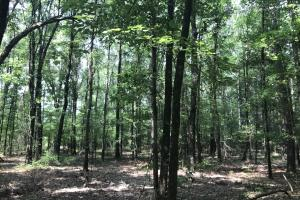 5.9 Acre Home Site & Timberland in Lincoln, AR (17 of 17)