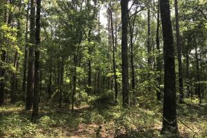 5.9 Acre Home Site & Timberland in Lincoln, AR (16 of 17)