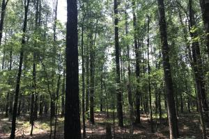 5.9 Acre Home Site & Timberland - Lincoln County AR