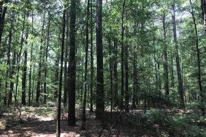 5.9 Acre Home Site & Timberland in Lincoln, AR (2 of 17)