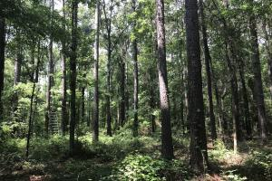 5.9 Acre Home Site & Timberland in Lincoln, AR (3 of 17)