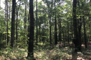 5.9 Acre Home Site & Timberland in Lincoln, AR (15 of 17)