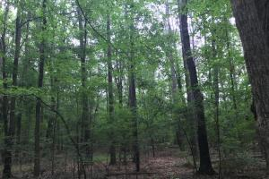 5.9 Acre Home Site & Timberland in Lincoln, AR (8 of 17)
