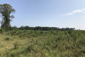Young Pine Plantation Investment - Morehouse Parish LA