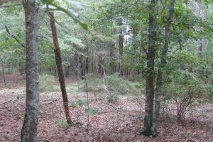 Fairview Crossroads Homesite and Timber Tract in Lexington, SC (8 of 16)